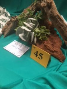 Korumburra Show 2017 - plant arrangement