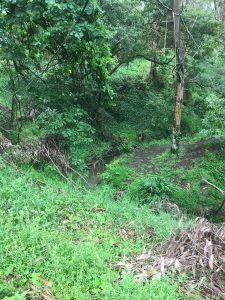 Kburra Botanic Gardens 0401