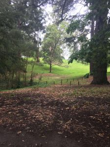 Kburra Botanic Gardens 0403