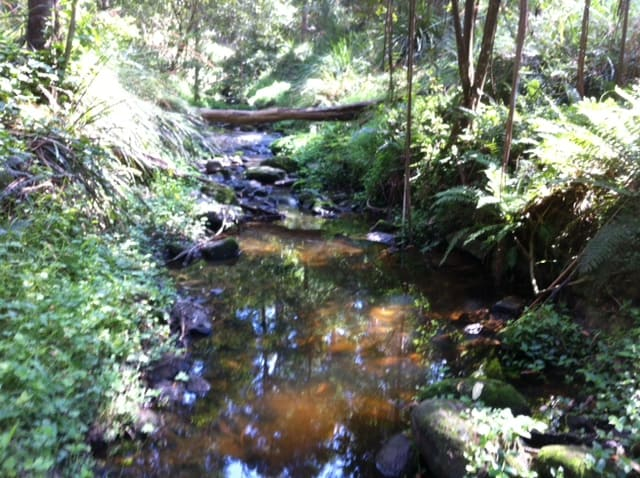 ritchie reserve