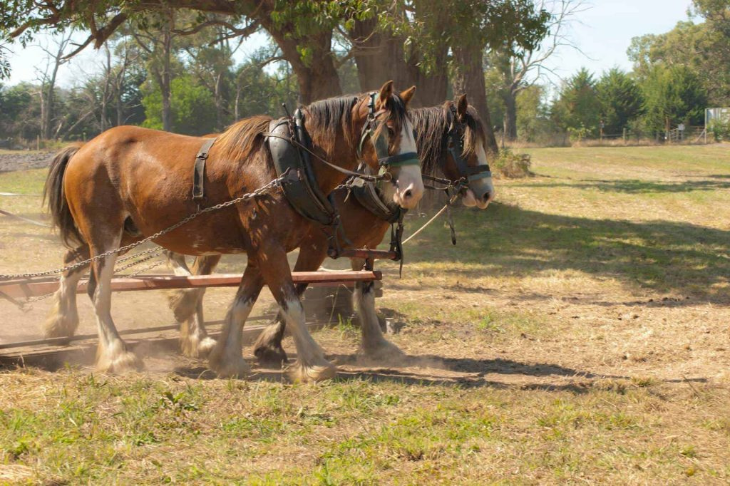 working horse rally